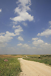 Israel, Shephelah. The Bible forest road between Tel Zafit and Beth Nir