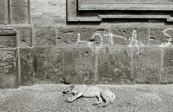 A stray dog sleeping in the sun in Naples. Italy 2003.