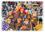 2014 Burlington American Sunflowers