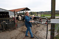 "Kelli Estrella closes a gate at the Estrella Family Creamery in Montesano,Wash.  on November 4, 2010.  ""I'd like to get back up and get going again."" she says regarding the Food and Drug Administration ordering them to stop processing cheeses after it found listeria bacteria on some of the cheeses this year.  The family says they have made many renovations on the farm and the bacteria is only found on the soft cheese, not everything.  They believe they should be allowed to resume making cheese and sell the hard cheeses they have already made at the facility.  The creamery is one of Washington's most famous artisan cheesemakers.  (photo credit Karen Ducey). ."