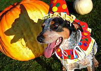Theo at Halloween