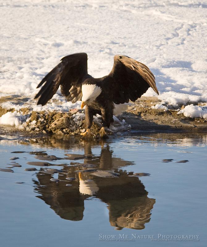 """Look at the Pretty Bird!"", Alaska"