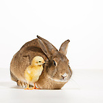 Judi - Rabbits Studio