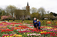 Hortus Bulborum in Limmen.  In de tuin staan meer dan 4000 soorten. De hortus, waarin voornamelijk tulpen staan, is in 1928 opgericht. Veel mensen bezoeken de hortus tijdens de jaarlijkse Bloemendagen. De Hortus Bulborum is een proeftuin waar nieuwe soorten worden gekweekt. Op de achtergrond de Protestantse kerk van Limmen
