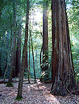 Big Basin Redwoods SP