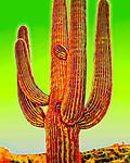Saguaro #36