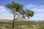 Israel, Upper Galilee, a view from the ancient Synagogue at Meron