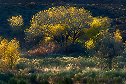 The last remnants of fall color illuminated by the glow of sunset in Utah.
