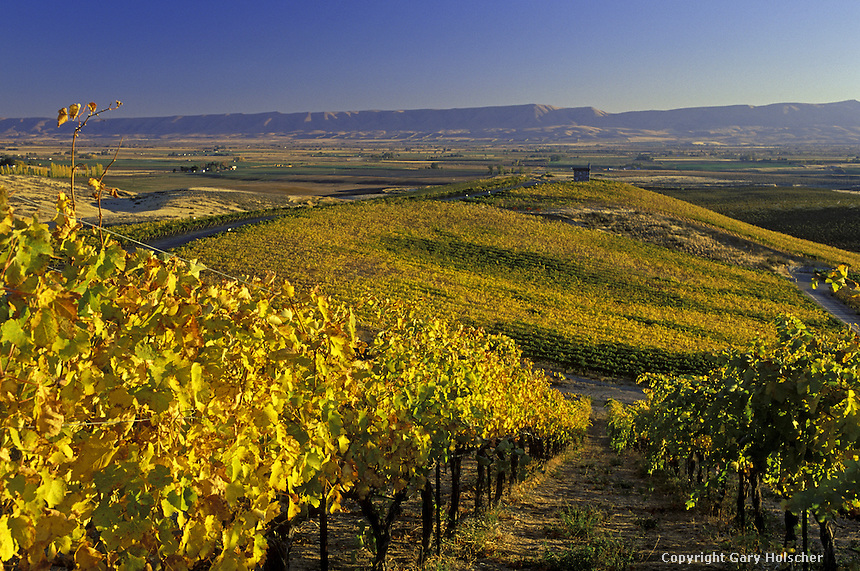 Wine vineyard in autumn with chapel.  Red Willow Vineyards. Columbia Basin. WA.