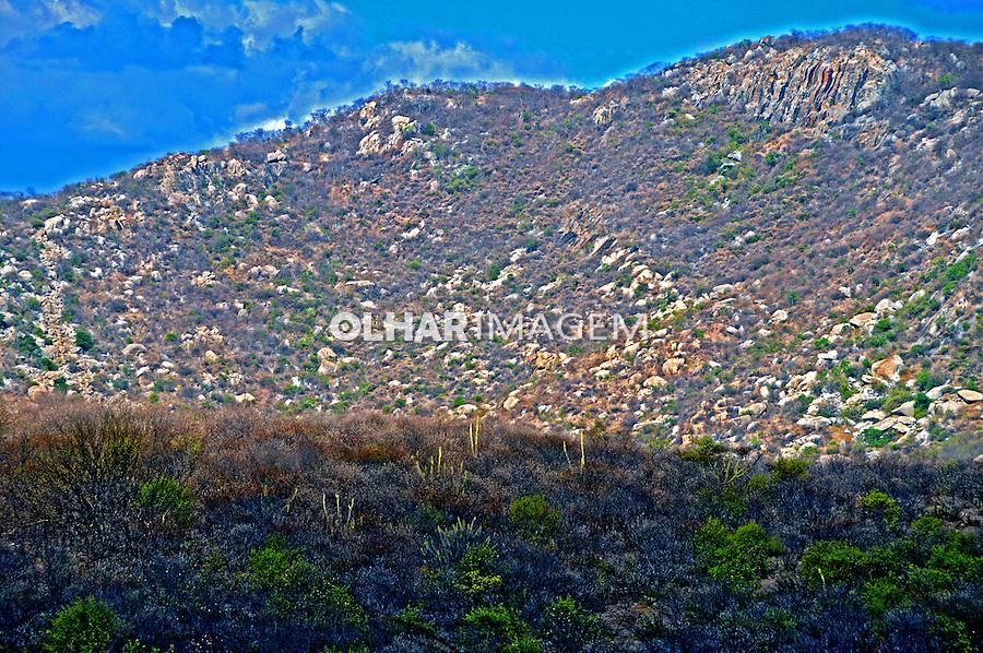 Vegetação de caatinga em Caicó. Rio Grande do Norte. 2009. Foto de Zig Koch.