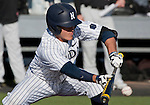 February 22, 2013: Nevada Wolf Pack batter Kyle Hunt lays down a bunt against the Northern Illinois Huskies during their NCAA baseball game played at Peccole Park on Friday afternoon in Reno, Nevada.
