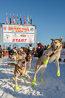 Alex Buetow lead dogs jump with excitement as the ready to leave during the restart in Willow, Alaska.  Iditarod Sled Dog Race 2014<br /> <br /> PHOTO (c) BY JEFF SCHULTZ/IditarodPhotos.com -- REPRODUCTION PROHIBITED WITHOUT PERMISSION