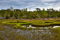 Scenic view from the Cedar Point boardwalk trail, located in the Croatan National Forest near Emerald Isle