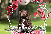 Bob, ANIMALS, REALISTISCHE TIERE, ANIMALES REALISTICOS, dogs, photos+++++,GBLA4278,#a#, EVERYDAY