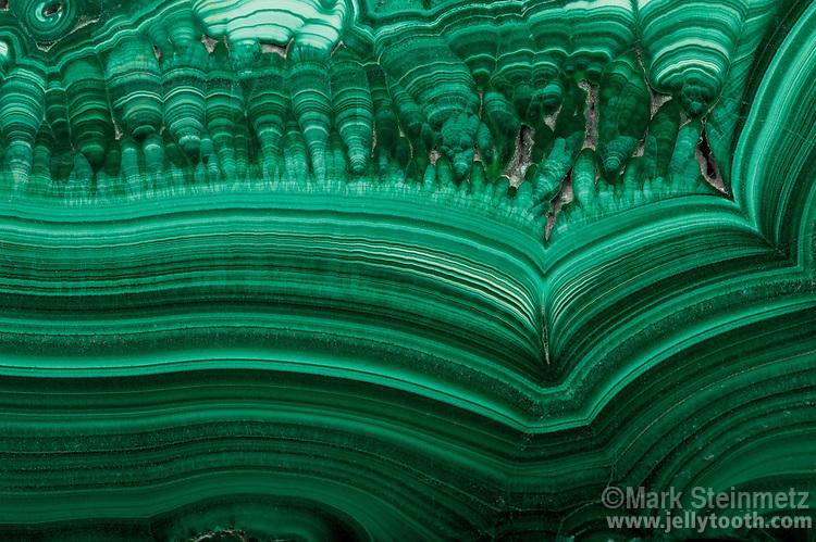 Close-up of a polished slab of malachite, a copper carbonate hydroxide mineral. Katanga mine, Katanga Province, (Zaire) Democratic Republic of Congo