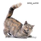 Xavier, ANIMALS, REALISTISCHE TIERE, ANIMALES REALISTICOS, FONDLESS, photos+++++,SPCHWS632,#A#