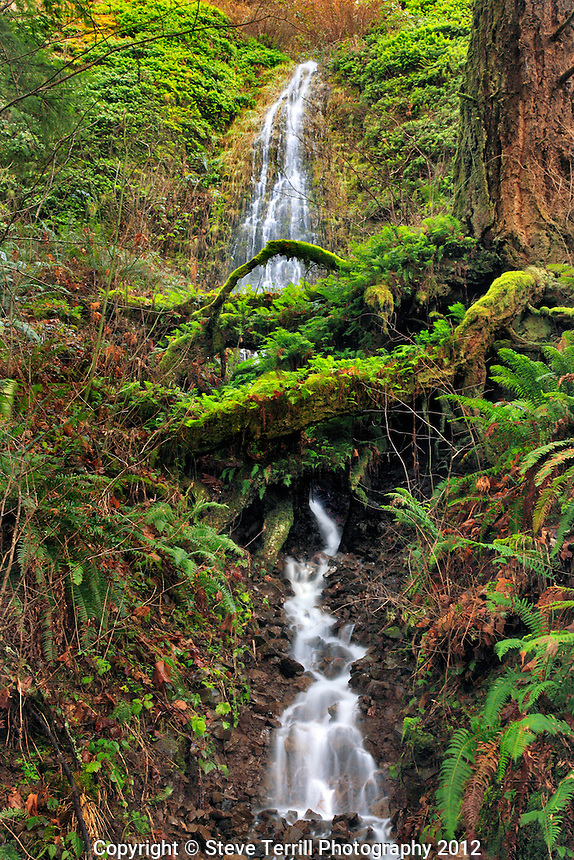 Moore Falls in Columbia River Gorge National Scenic Area, Oregon