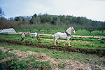 B and Simon ploughing with Sam the Shire horse   Tinker's Bubble, Low impact community,  Somerset