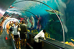 Tourists watching sharks from underwater glass viewing tube in the Shark Encounter pool at Sea World, near San Diego, California
