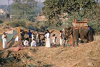 Mahout elephant handler back home at his village outside Delhi, India
