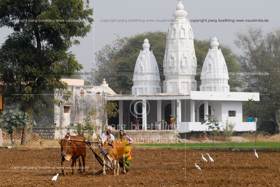 "Asien Suedasien Indien Madhya Pradesh , Bauer und Baeuerin saehen Weizen mit Ochsen  vor Hindutempel  -  Landwirtschaft Religion xagndaz | .South asia India Madhya Pradesh , farmer sow wheat with ox in front of Hindu temple  - agriculture religion .| [ copyright (c) Joerg Boethling / agenda , Veroeffentlichung nur gegen Honorar und Belegexemplar an / publication only with royalties and copy to:  agenda PG   Rothestr. 66   Germany D-22765 Hamburg   ph. ++49 40 391 907 14   e-mail: boethling@agenda-fototext.de   www.agenda-fototext.de   Bank: Hamburger Sparkasse  BLZ 200 505 50  Kto. 1281 120 178   IBAN: DE96 2005 0550 1281 1201 78   BIC: ""HASPDEHH"" ,  WEITERE MOTIVE ZU DIESEM THEMA SIND VORHANDEN!! MORE PICTURES ON THIS SUBJECT AVAILABLE!!  ] [#0,26,121#]"