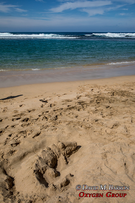 Sand Crocodile, Ke'e Beach