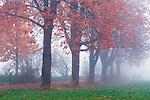 Europa, DEU, Deutschland, Nordrhein Westfalen, NRW, Rheinland, Niederrhein, Krefeld, Naturschutzgebiet Huelser Bruch, Herbst, Nebel, Baeume, Kategorien und Themen, Natur, Umwelt, Landschaft, Jahreszeiten, Stimmungen, Landschaftsfotografie, Landschaften, Landschaftsphoto, Landschaftsphotographie, Wetter, Wetterelemente, Wetterlage, Wetterkunde, Witterung, Witterungsbedingungen, Wettererscheinungen, Meteorologie, Wettervorhersage....[Fuer die Nutzung gelten die jeweils gueltigen Allgemeinen Liefer-und Geschaeftsbedingungen. Nutzung nur gegen Verwendungsmeldung und Nachweis. Download der AGB unter http://www.image-box.com oder werden auf Anfrage zugesendet. Freigabe ist vorher erforderlich. Jede Nutzung des Fotos ist honorarpflichtig gemaess derzeit gueltiger MFM Liste - Kontakt, Uwe Schmid-Fotografie, Duisburg, Tel. (+49).2065.677997, ..archiv@image-box.com, www.image-box.com]