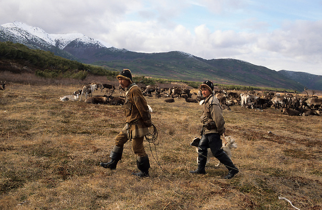 Chukchi reindeer herders checking on their reindeer at their autumn pastures near Khailino. Koryakia, Kamchatka, Siberia, Russia.