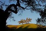 Oak woodland in Sonoma County