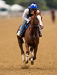 ELMONT, NY - JUNE 07: Free Drop Billy gallops in preparation for the 150th Belmont Stakes at Belmont Park on June 07, 2018 in Elmont, New York. (Photo by Alex Evers/Eclipse Sportswire/Getty Images)