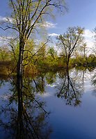 Trees and shrubs reflect their images in the surprisingly still waters of the Portage River in Jackson County, Michigan