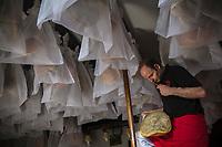France, Pyrénées-Atlantiques (64), Pays-Basque, Saint-Jean-le-Vieux, Maison Mayté, Eric Mayté et ses jambons IIbaïama  dans son séchoir // France, Pyrenees Atlantiques, Basque Country, Saint Jean le Vieux,    Maison Mayté, Eric Mayté with  Ibaïama  ham, in the  séchoir, ham aging facility <br /> (Auto N°: 2014-146) <br /> [Non destiné à un usage publicitaire - Not intended for an advertising use]