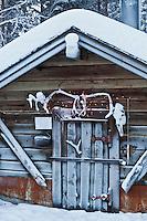 Europe/Finlande/Laponie/ Env de Levi: Levin Lapinkylä est une ferme traditionnelle le long de la Ounasjoki -C'est: La ferme des rennes