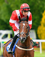 Corrida De Toros ridden by Callum Shepherd goes down to the start  of The Wilton Homes Novice Stakes  during Evening Racing at Salisbury Racecourse on 11th June 2019