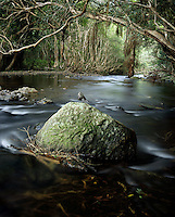 Freshwater Creek<br /> FNQ