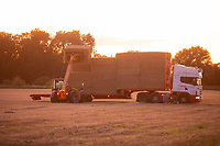 Lorry being loaded with straw in the late evening sunshine <br /> ©Tim Scrivener Photographer 07850 303986<br />      ....Covering Agriculture In The UK....
