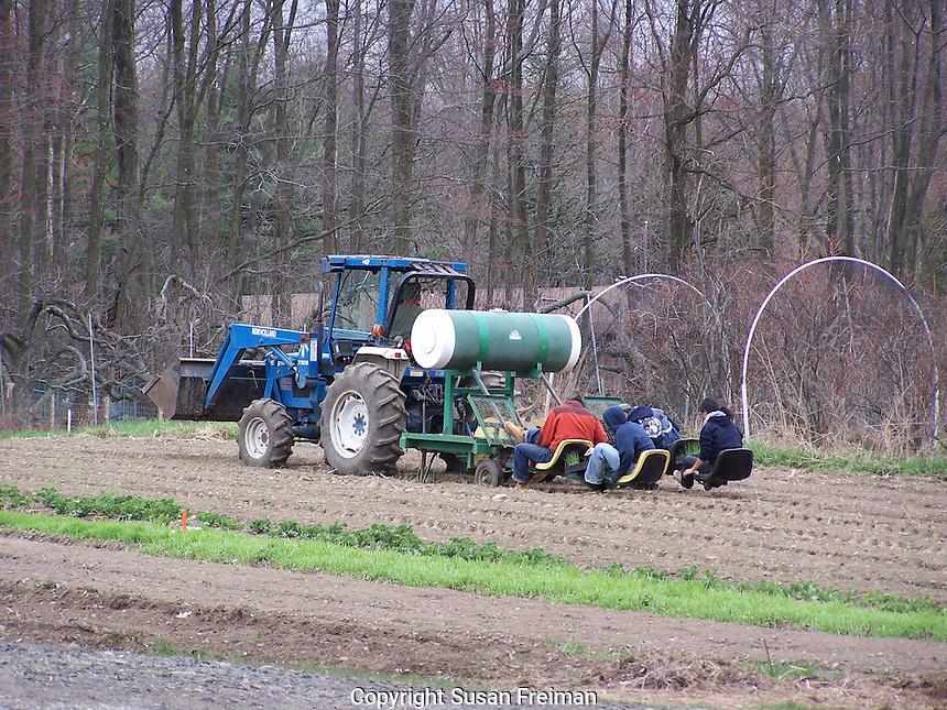 Planting Crops, Threefold Farm, Chestnut Ridge, NY Gardens and Farms,