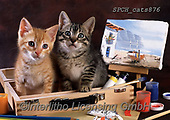 Xavier, ANIMALS, REALISTISCHE TIERE, ANIMALES REALISTICOS, cats, photos+++++,SPCHCATS876,#a#, EVERYDAY