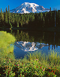 Mount Rainier National Park, WA<br /> Morning light on Mount Rainier with spirea blooming on shoreline of Reflection Lake