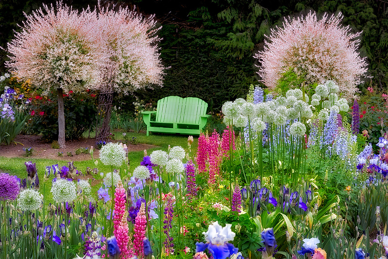 Schreiner's Iris Gardens with bench, Oregon
