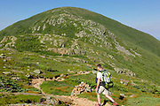 Solo hiker traveling south along the Appalachian Trail (Crawford Path) in the White Mountains, New Hampshire USA during the summer months. Mount Eisenhower is straight ahead.