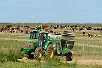 URUGUAY cattle farm, feedlots with maize for cows / URUGUAY Rinderfarm Futtermast mit Mais in sogenannten feedlots