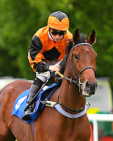 Bear Force One ridden by Jason Watson goes down to the start  of The Wilton Homes Novice Stakes during Evening Racing at Salisbury Racecourse on 11th June 2019