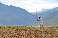 Wumu Village, Yulong County, Yunnan Province, China - Dongba priest He Jixian of the Naxi ethnic group tends his field, June 2019.
