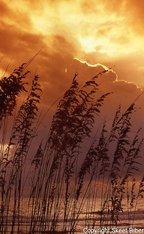 Sea oats at Sunrise