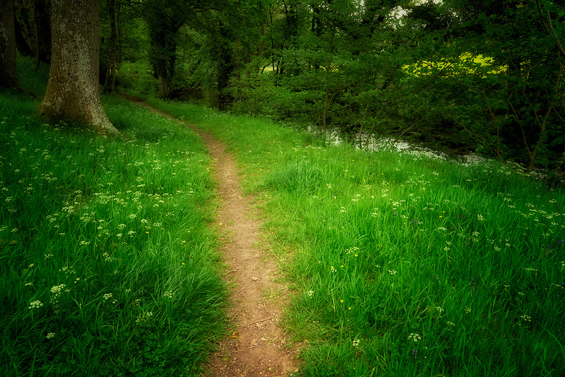 Path along Teign River with wildflowers. Dartmoor National Park, England