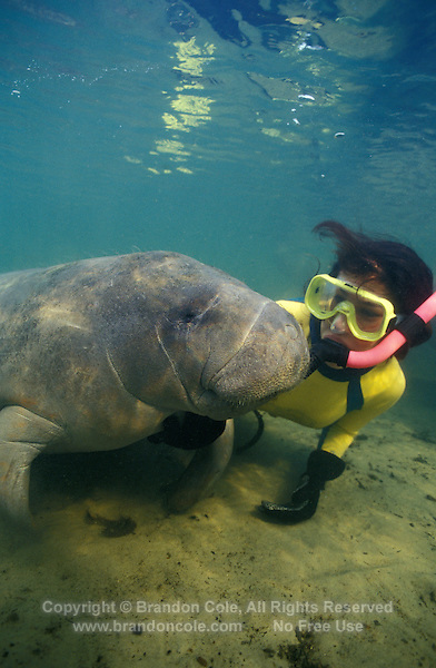 Photo LR-397. West Indian Manatee (Trichechus manatus) and Melissa Cole (Model Released). Florida, USA..Photo Copyright © Brandon Cole.  All rights reserved worldwide.  www.brandoncole.com..This photo is NOT free. It is NOT in the public domain...Rights to reproduction of photograph granted only upon payment of invoice in full.  Any use whatsoever prior to such payment will be considered an infringement of copyright...Brandon Cole.Marine Photography.http://www.brandoncole.com.email: brandoncole@msn.com.4917 N. Boeing Rd..Spokane, WA 99206   USA..tel: 509-535-3489.
