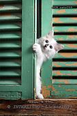 Xavier, ANIMALS, cats, photos+++++,SPCHCATS733,#a# Katzen, gatos