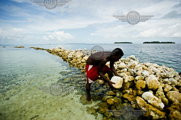 A man piles up live coral in an attempt to protect Kennedy island, which gets it's name from when John F Kennedy was shipwrecked here during WW2.