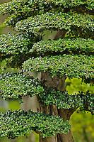 Bonsai tree, Bao Family Garden, China